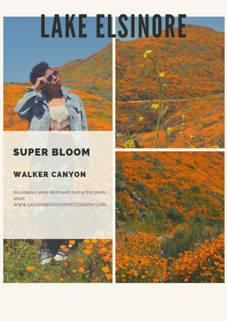 Lake Elsinore poppy super bloom